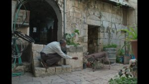 A man kneels and feeds a small deer.